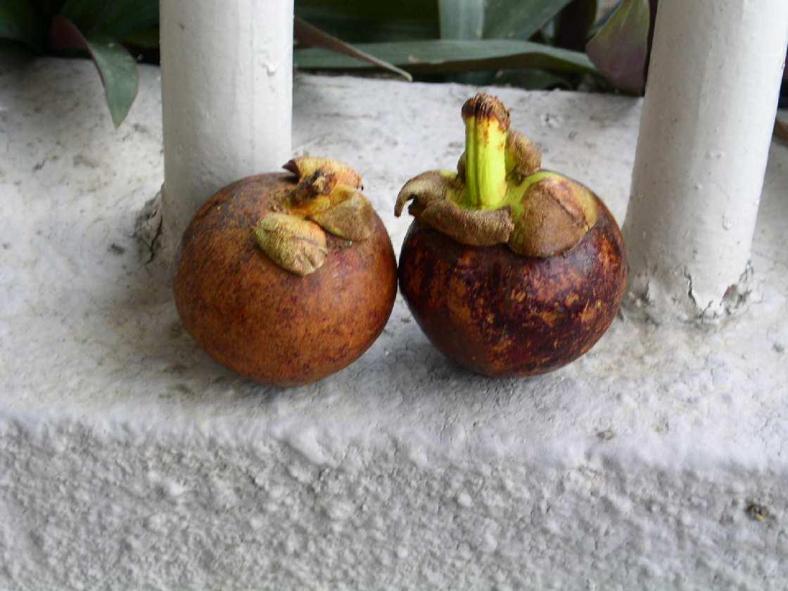 Tropikalne Owoce Strefy Pacyfiku I Ich Niezwykłe Własności Po Polsku